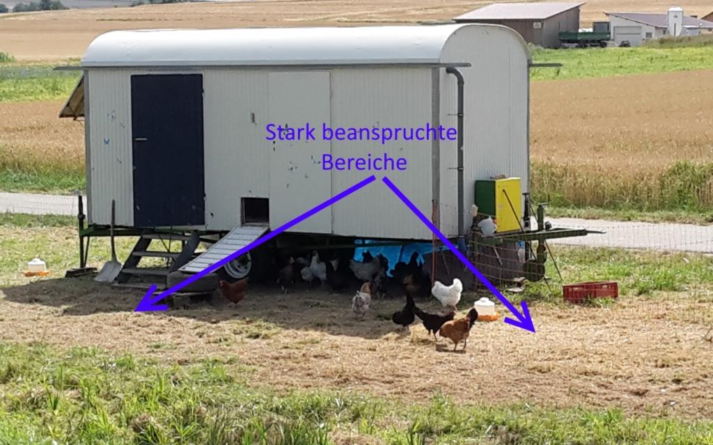 Fehlende Grasnarbe vor dem mobilen Hühnerstall