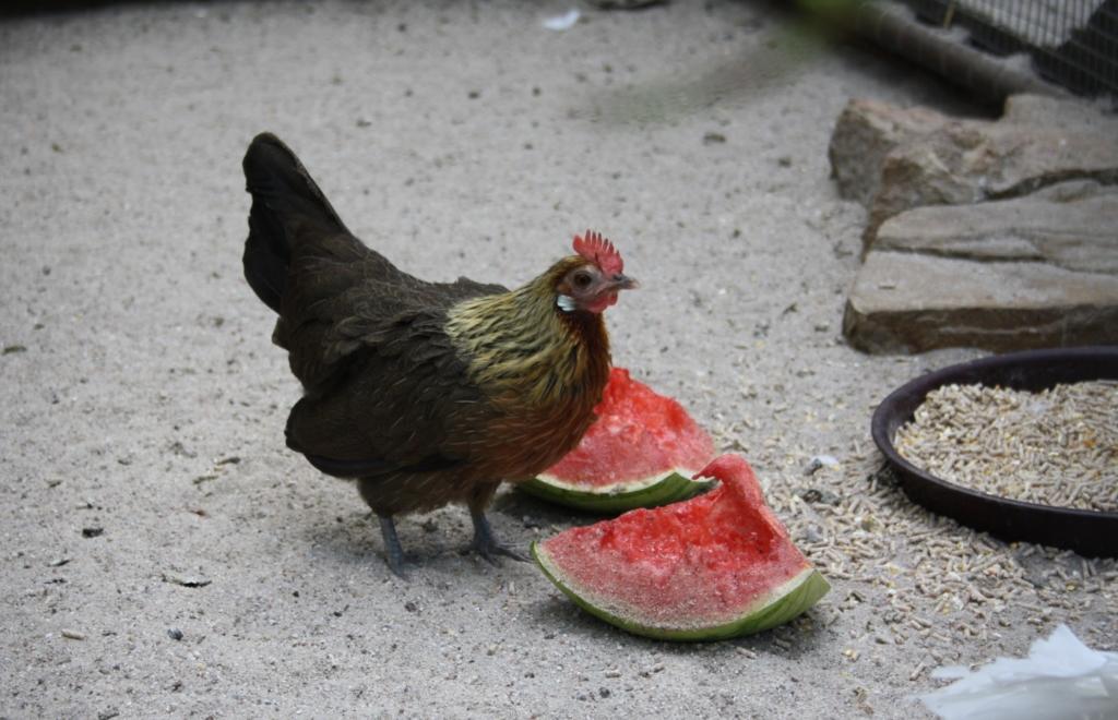Obst und Gemüse als Abwechslung vom Fertigfutter
