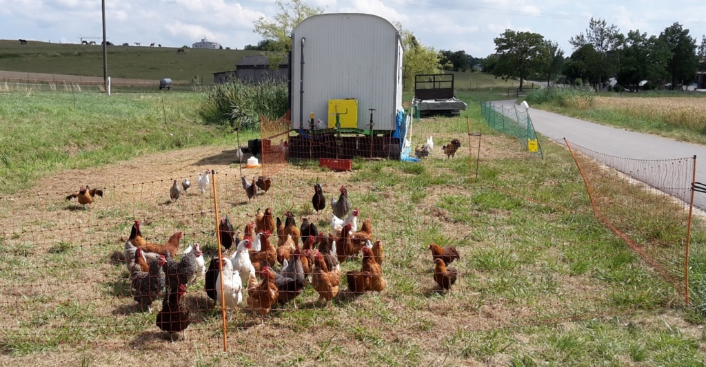 Das Geflügelnetz als Hühnerzaun