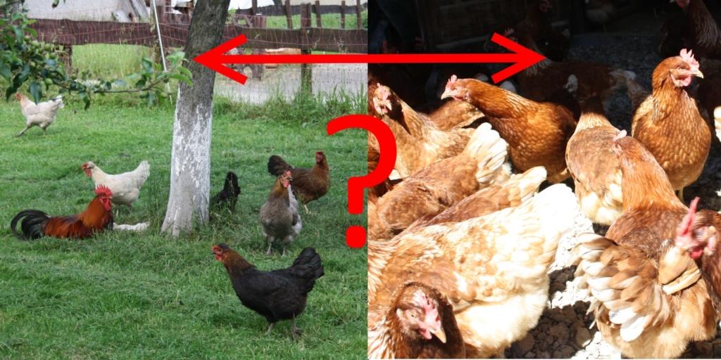 Größe des Hühnerstalls