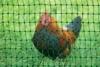 grüner Gartenzaun 50 m x 112 cm Hühnerzaun + 14 Pfähle Hühner-Zaun Geflügelzaun Garten - 1